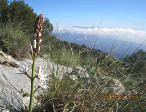 Ruta de Senderismo. Casarabonela . Sierra de Alcaparain. A cima Valdivia desde Puerto Martínez. Fecha: Domingo 23 Febrero 2020.